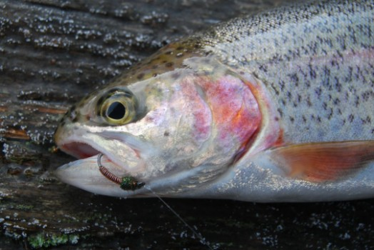 Fly & Trout Fishing in Exe Valley, Devon & Somerset